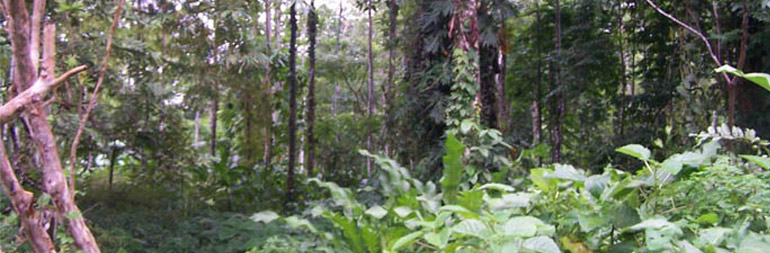 volunteer in environmental conservation project in Costa Rica