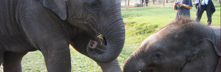 volunteer in elephanat conservation project in sri lanka